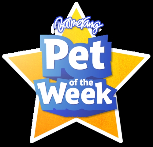 Opportunity to Associate with Hugely Successful Pet of the Week