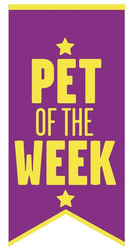 Sponsorship of 'Pet of the Week' competition on Boomerang
